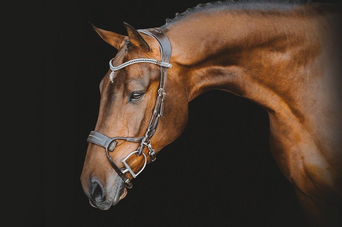 Амуніція для коня