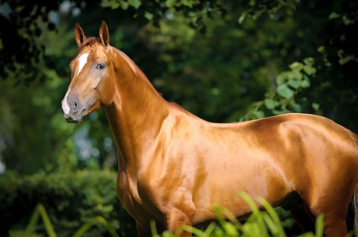 Сколько стоит лошадь в Украине