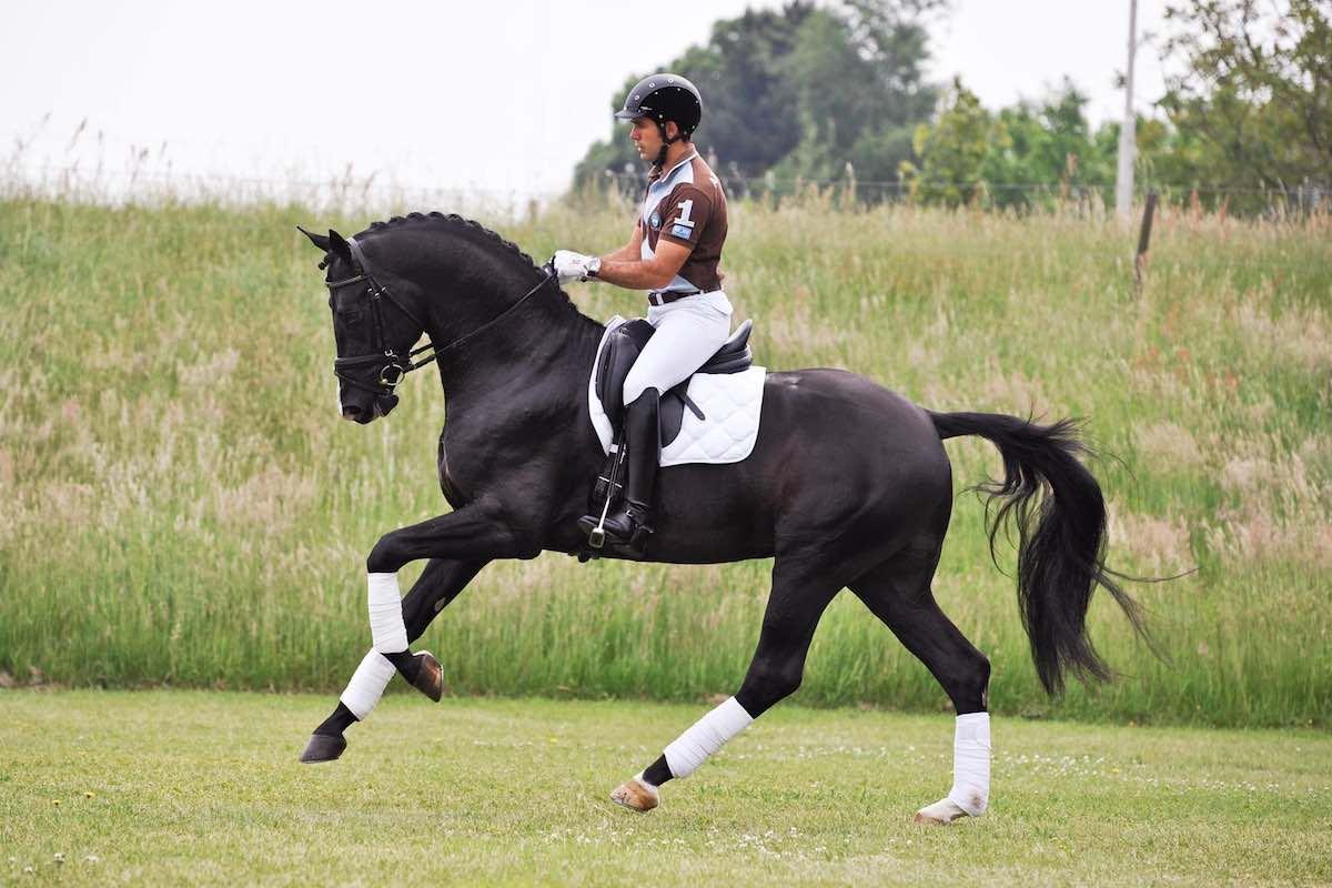 Як їздити на коні: основи верхової їзди