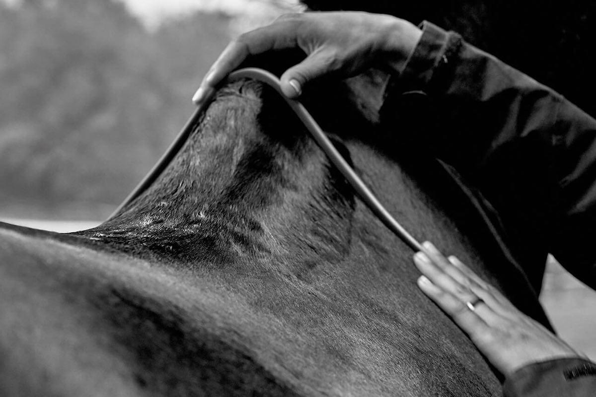 Як визначити розмір коня