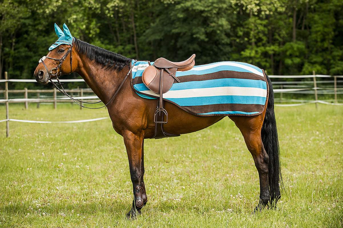 Полупопона для лошади