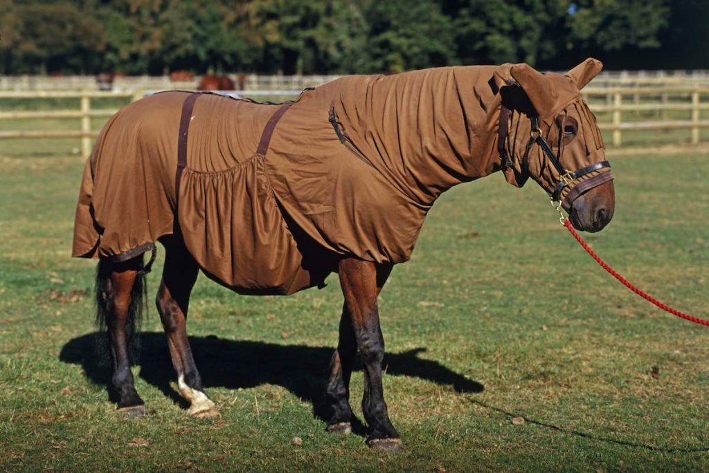 Попона для коня