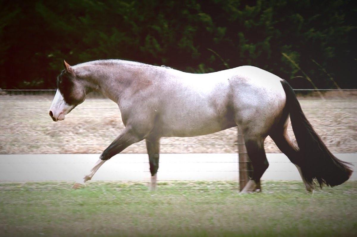 Чалый конь