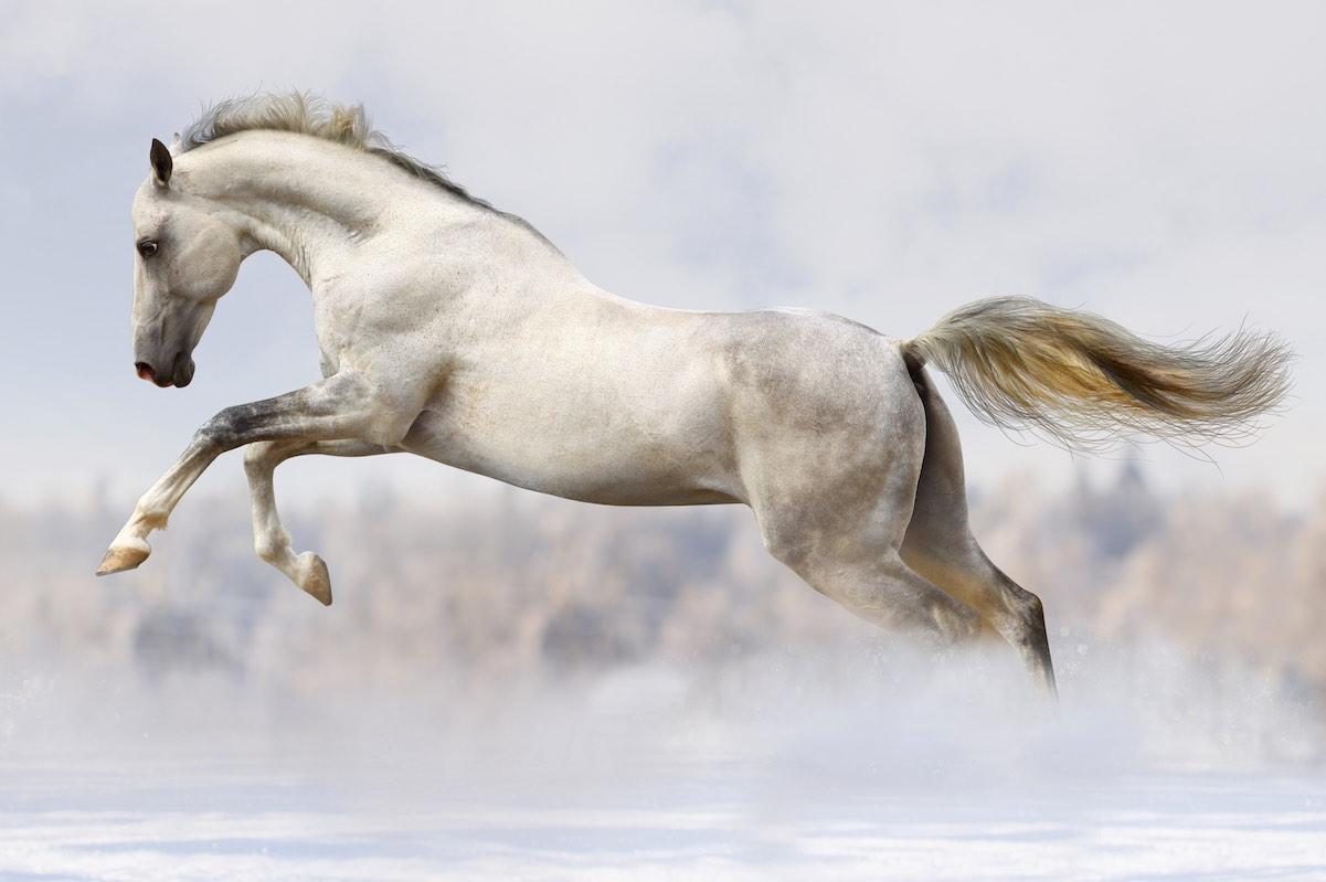 Сірий кінь