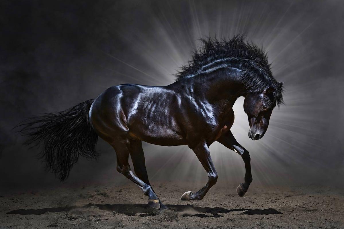 Вороний кінь