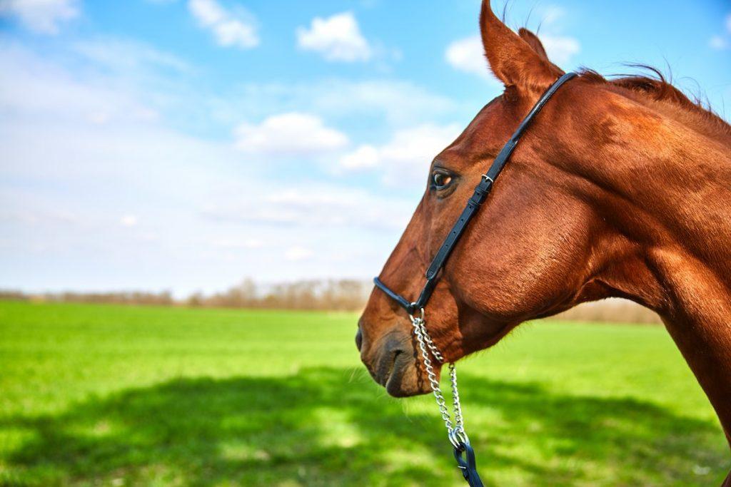 Фотосессии с лошадьми в Киеве