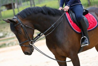 """Шпрунт для коня """"Romeo"""" Fouganza1"""