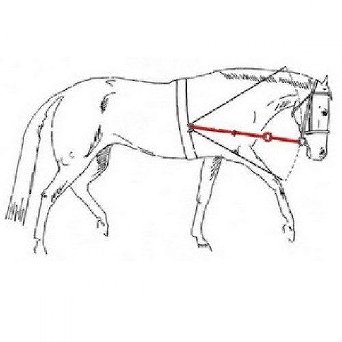 Розв'язки для коня York1