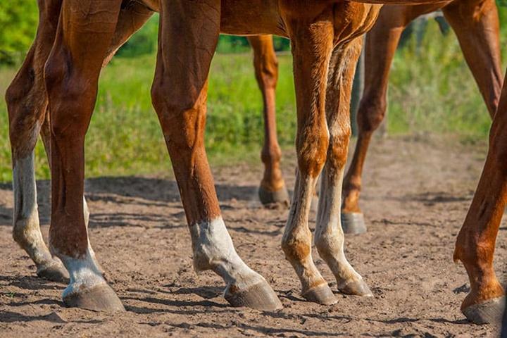 Глина с фитокомплексом для лошадей фото