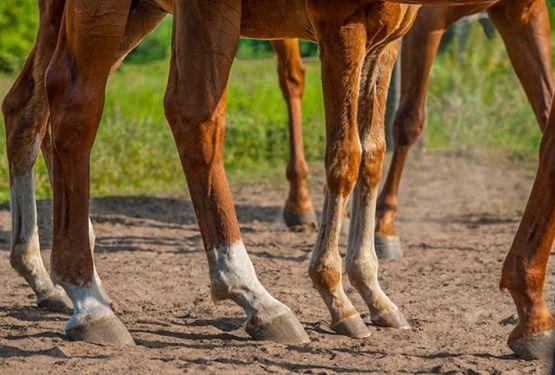 Глина з фітокомплексом для коней фото
