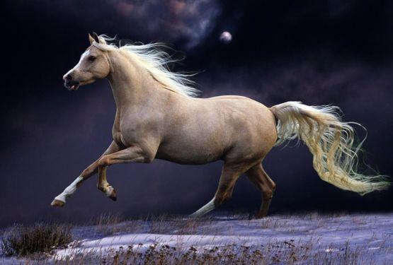 Як доглядати за хвостом і гривою коня