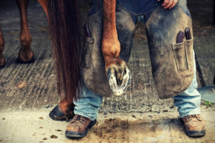 Уход за ногами и копытами коня