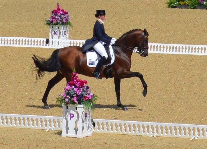 Выездка в конном спорте