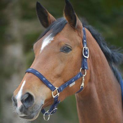 """Недоуздок для коня """"Horsemotif"""" Waldhausen"""