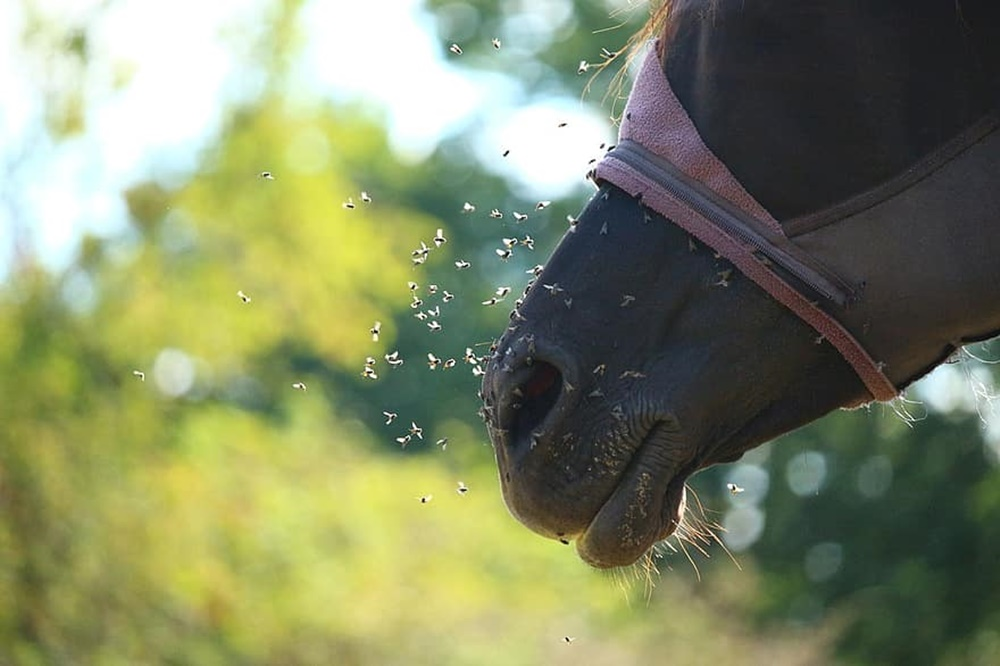 7 полезных советов как защитить лошадь от слепней и оводов
