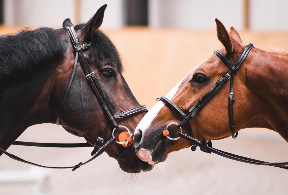 Вибір заліза для коня: як вибрати потрібний вид та розмір трензеля