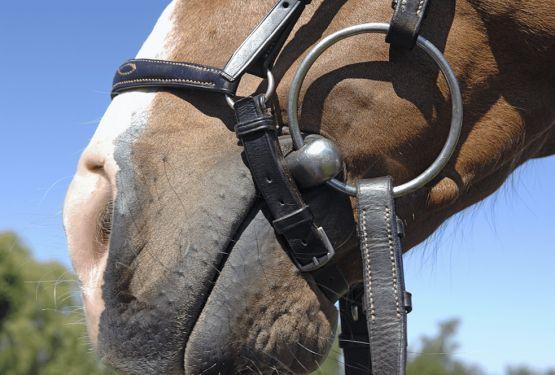 Выбор железа для лошади: как выбрать нужный вид и размер трензеля