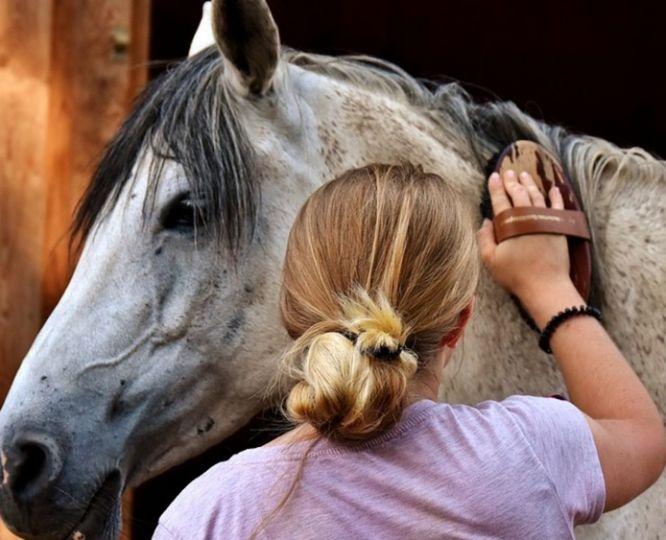 Как правильно чистить лошадь: инструкция для начинающих