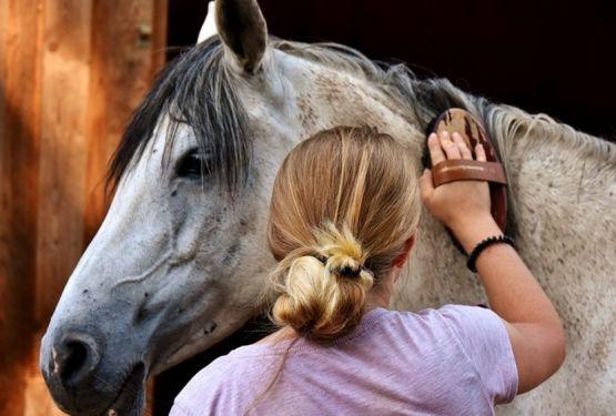 Як правильно чистити коня: інструкція для початківців