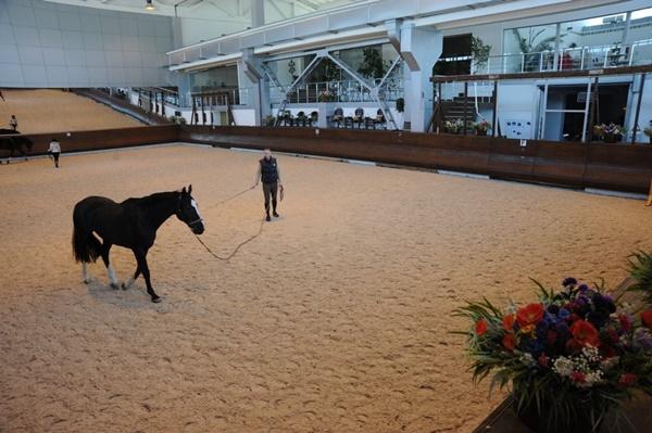 Horses of Anastasia