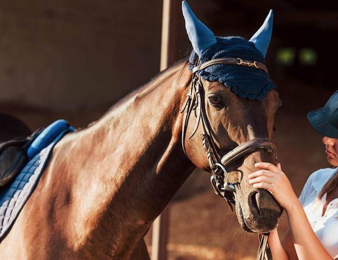 Уход за конной амуницией: советы профессионалов