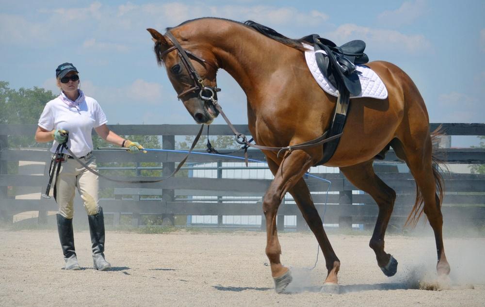 Як працювати з конем на корді: команди, засоби, рекомендації