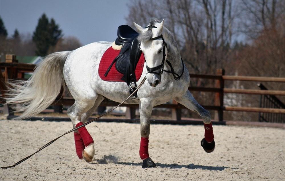 Как работать лошадь на корде