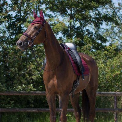 Вушка для коня Florence, QHP