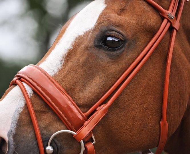 Вибираємо вуздечку для коня