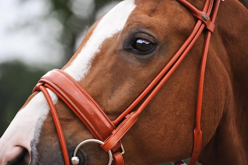 Выбираем уздечку для лошади